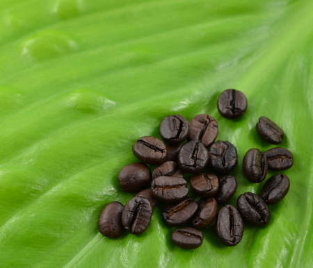 coffee beans on close-up photo photo