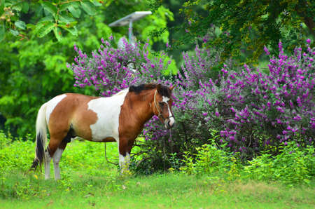 bevy: Horse on a summer pasture