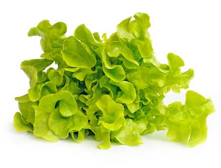 fresh green lettuce leaves isolated on white photo