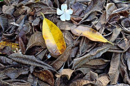 Trockene Bl�tter auf dem Boden f�r Hintergrund