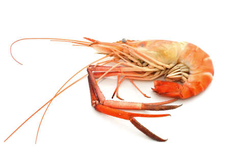 Boiled shrimp isolated on white photo