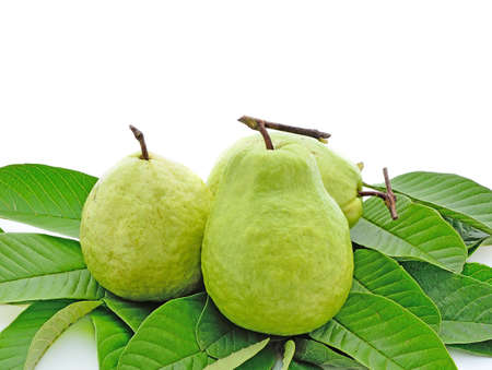 scurvy: Guava (tropical fruit) isolated on white background