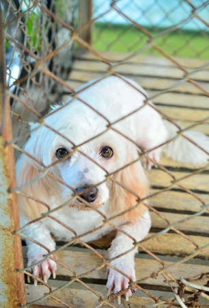 best shelter: Dog in a cage. Stock Photo