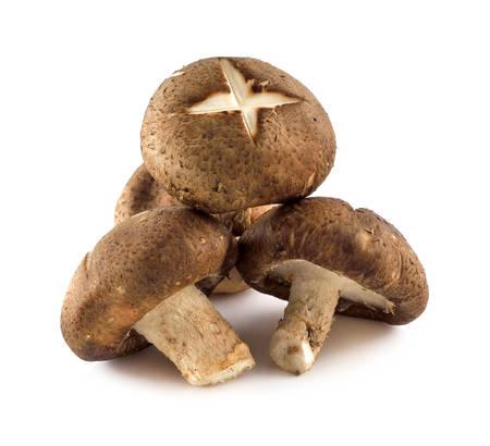 Shiitake mushrooms (Lentinula edodes).
