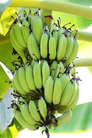 Bananenplantage Lizenzfreie Bilder
