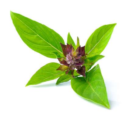 basil leaves isolated on white background Stock Photo