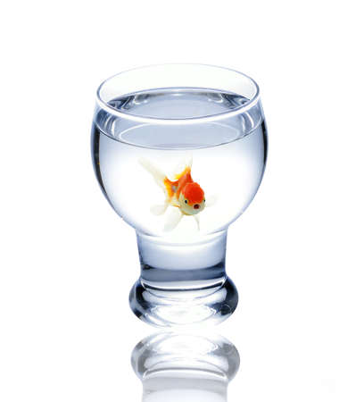 fish in drinking glass photo