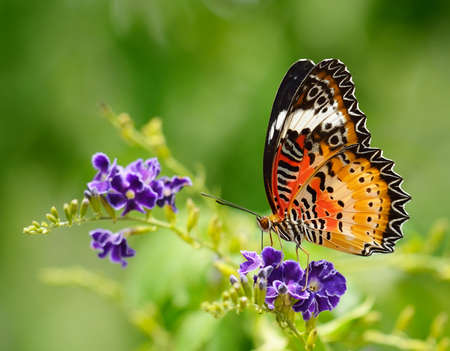 Butterfly on a violet flower photo