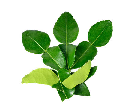 kaffir: Kaffir lime leaves isolated