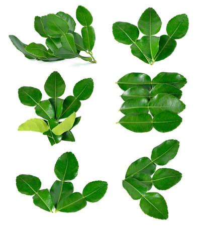 Kaffir lime leaves isolated on white