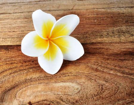 frangipani flower on wood photo