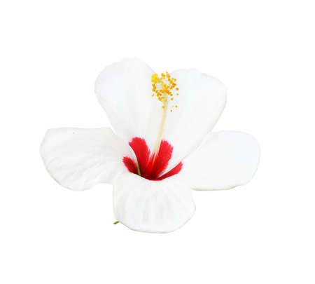 wei�e Blume isoliert auf wei�em Hintergrund