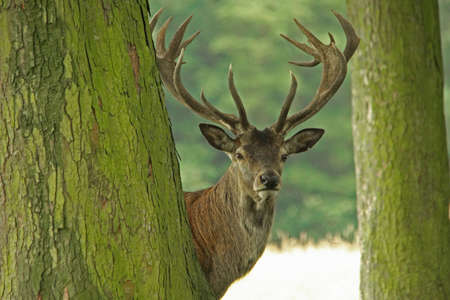 Red Deer photo