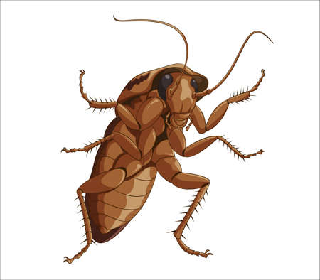 Big cockroach Stock Vector - 17354439