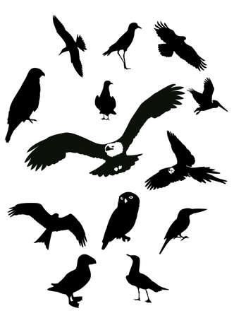 Silhouettes of birds Illustration