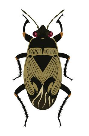 Ground Bug Illustration