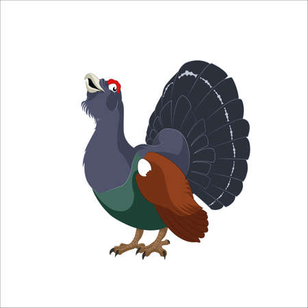 image of cartoon funny wood grouse