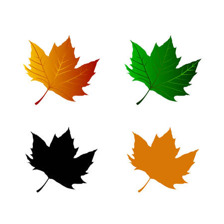 Vector image of collection of leaf of maple Stock Vector - 18663659
