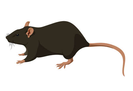 Rat Stock Vector - 18663660