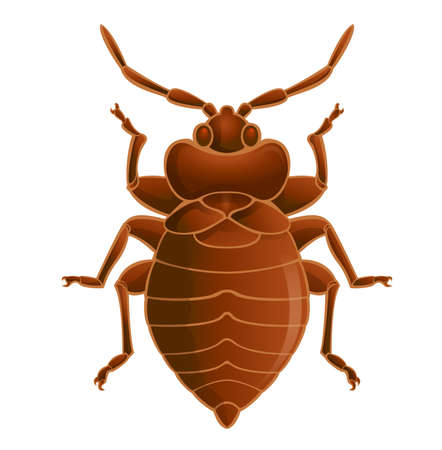 an insect: Vector image of simbol of  brown bedbug