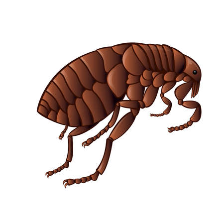 Vector image of simbol of  brown flea Illustration