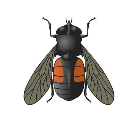 temperate: Vector image of simbol of  big horsefly