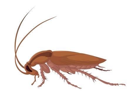 image of big bad brown cockroach