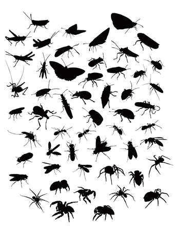 Collection of sillhouettes of insects and spiders Vector