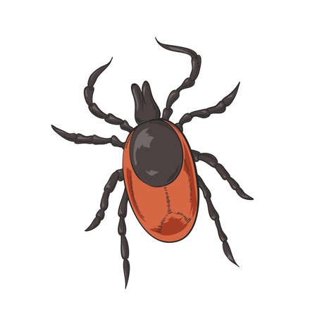 mite: image of big red shiny tick Illustration