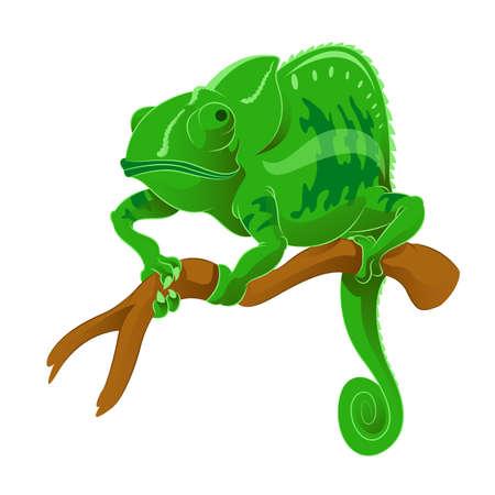 Vector image of an green Chameleon on the branch Illustration