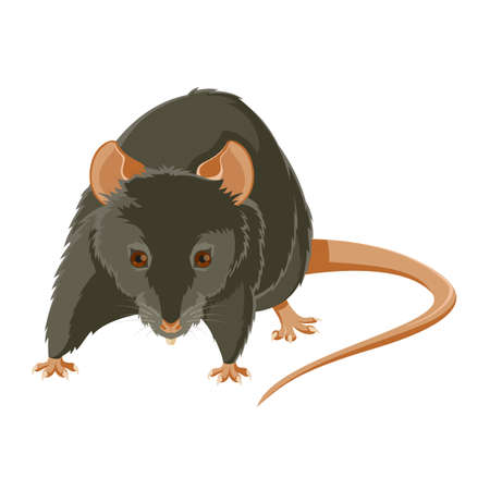 computer mouse: image of a gray evil rat Illustration