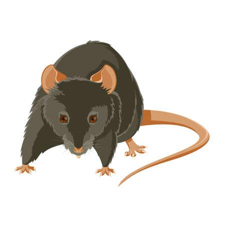 rata caricatura: la imagen de una rata gris mal