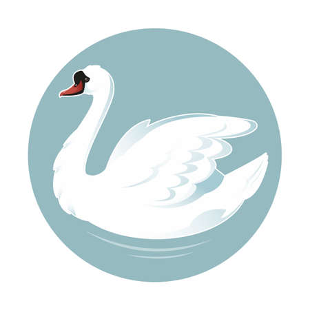 swimming swan: image of an white beautiful swan