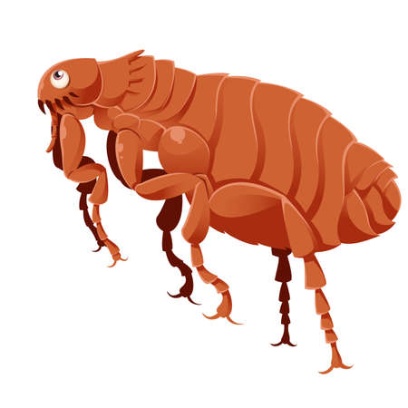 image of a cartoon brown flea