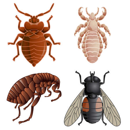 disgusting: Vector image of set of icons with pests