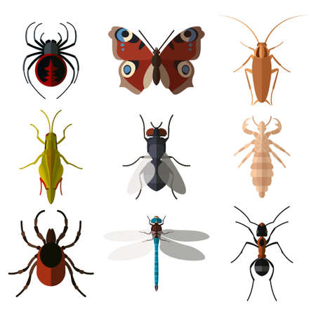 louse: Vector image of set of insect flat icons