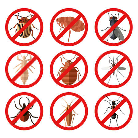 Vector image of set of flat icons with pests