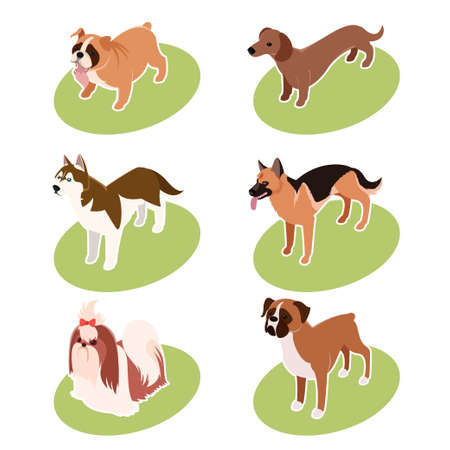 shih tzu: Vector set of isometric icons of various dogs