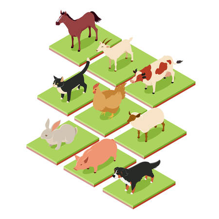 illustration zoo: Vecto image of the Domestic isometric animals