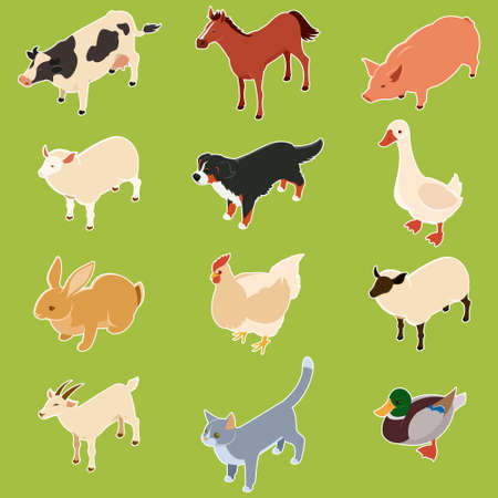domestic animals: Vecto image of the Domestic isometric animals