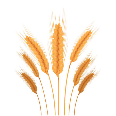sheaf: Vector image of a some parts of wheat