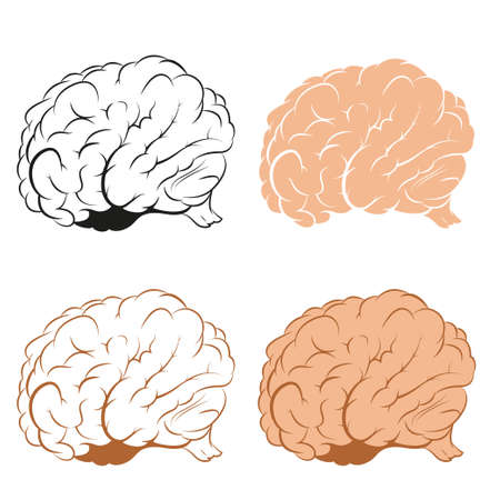 Vector image of brains in diffirent style Illustration