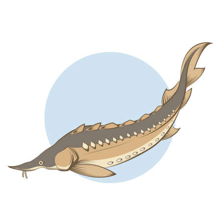 sturgeon: brown line sturgeon Illustration