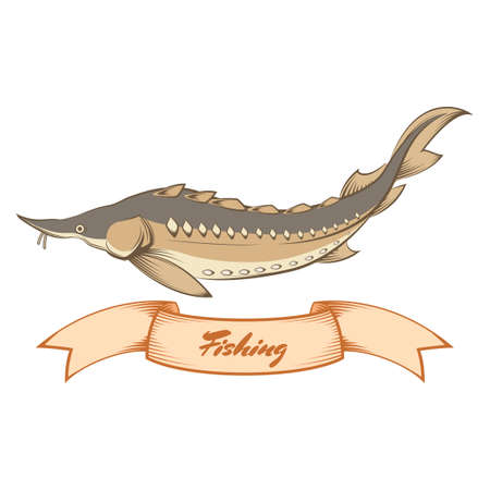 sturgeon: image of a Sturgeon fishing banner