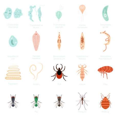 head louse: Vector image of the Set of icons of parasites Illustration