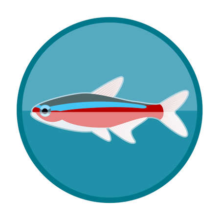 tetra fish: Vector image of the Neon fish icon Illustration