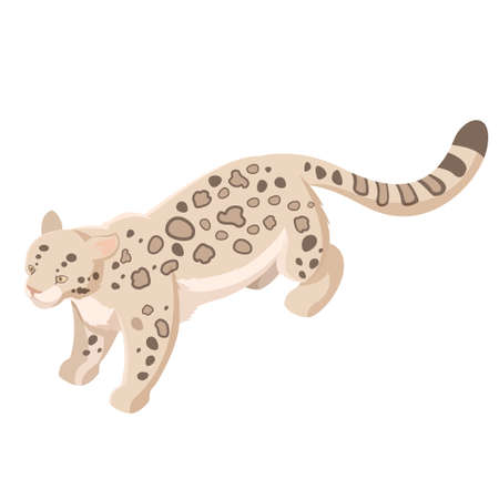 snow leopard: Vector image of the Isometric snow leopard Illustration
