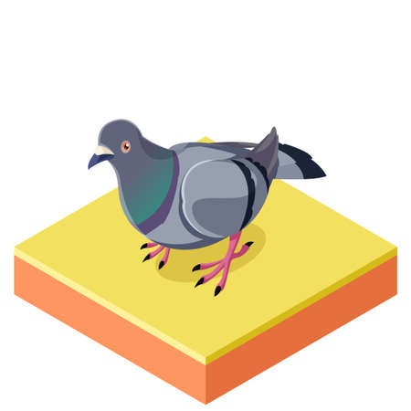 beak pigeon: Vector image of the Isometric Pigeon on the square ground