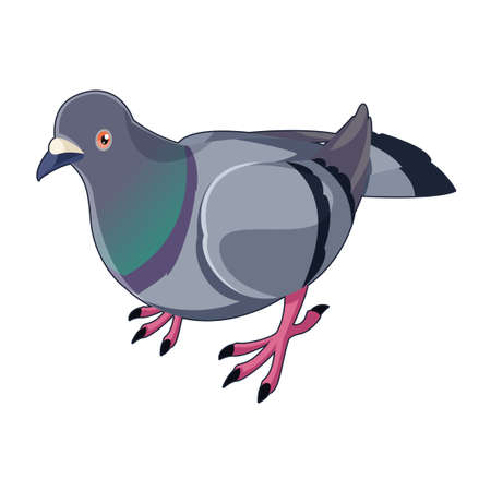 Vector image of the Pigeon isometric icon
