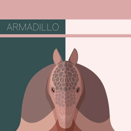 Vecor image of the Flat postcard with Armadillo 矢量图像